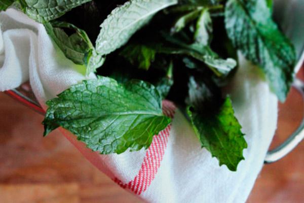 Чай из листьев мяты для прекращения лактации