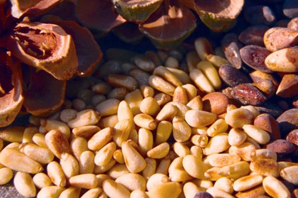 кедровый орех при кормлении грудью